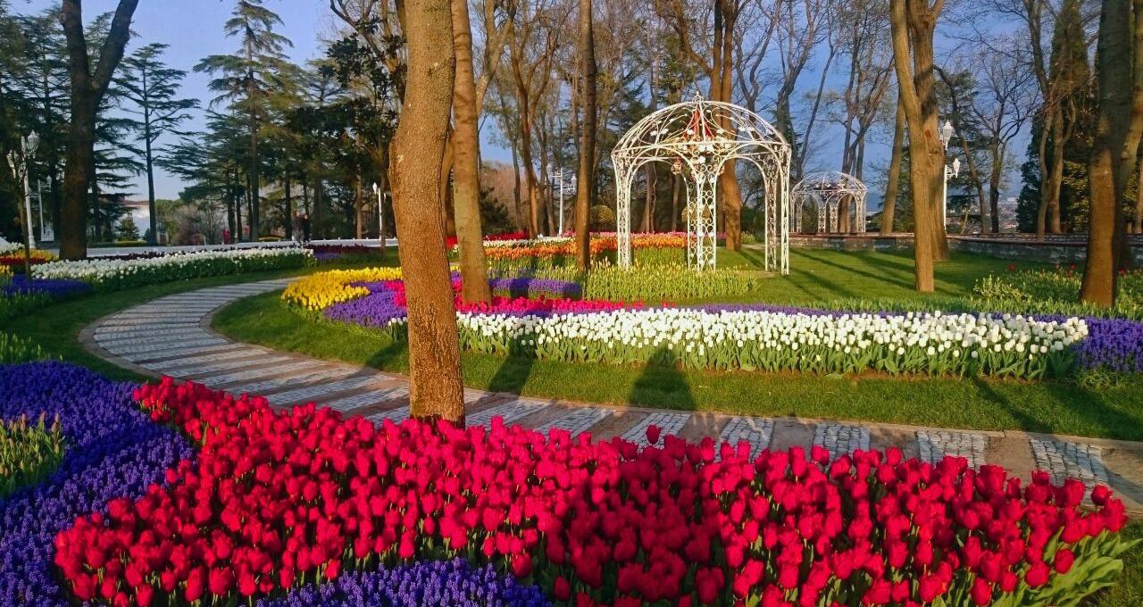 Фестивалът на лалето в Истанбул - феерия от цветове